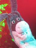 Luciano-Vittori-donkey